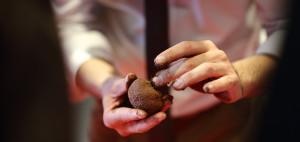 reforestacion-indoor-nendo-dango-evento-sostenible-exploramas